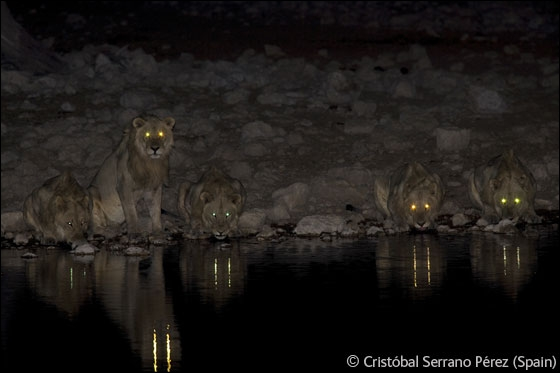 D'après vous, et en regardant cette photo prise de nuit, sur quel continent êtes-vous ?