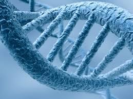 L'ADN et l'ARN