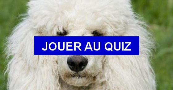 Quizz Races de chiens à traduire en anglais - Quiz Anglais