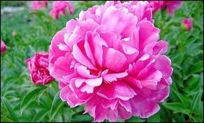 De quelle variété de fleur s'agit-il ?