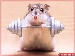 Il n'y a pas beaucoup de muscles chez lui ! Quand on dit qu'il y a une petite quantité, on dit :