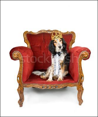 Les chiens sont rois ! Comment s'appelle un souverain vassal d'un sultan ?