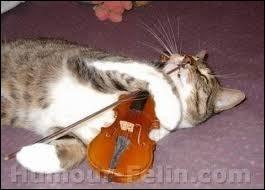 Un animal haut de gamme ! Si vous trouvez un instrument de musique brésilien à une seule corde, vous pouvez être sûrs qu'il s'agit d'un :