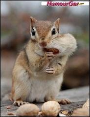 Une petite faim ? C'est une concrétion de l'estomac chez les herbivores :