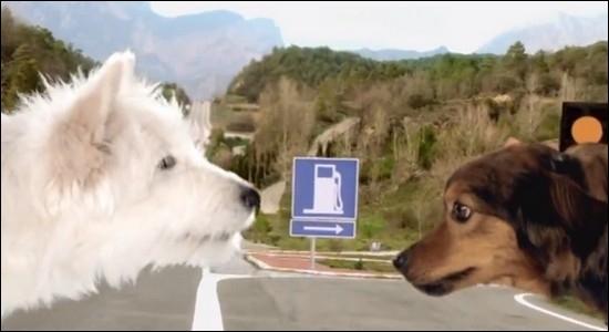 Grâce à l'histoire d'amour naissante entre deux chiens, le constructeur automobile nous fait découvrir sa nouvelle voiture. Il s'agit de...