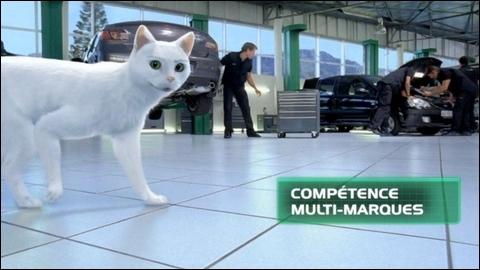 Ce chat est l'un des leaders de l'entretien et de l'équipement automobile. Il s'agit de...