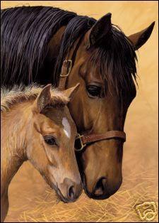 Combien d'os a en moyenne un cheval ?