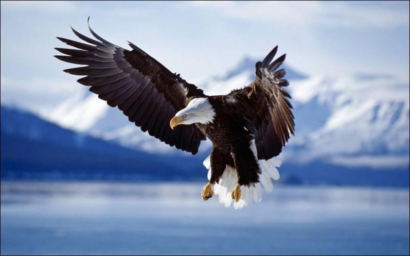 Comment dit-on un  aigle  en anglais ?