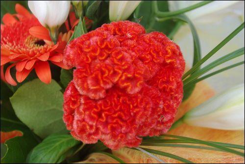 quizz au panier de fleurs quiz culture generale