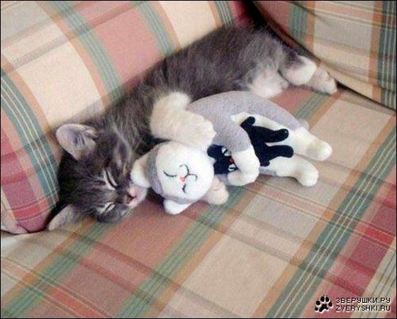 Les deux peluches de ce chat sont des ours !