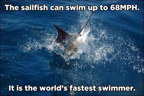 Un requin surgit dans une magnifique gerbe d'eau !