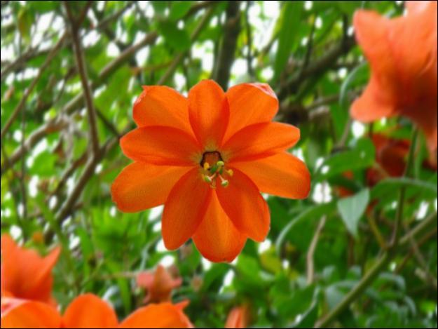 Passiflora parritae est une des plus rares passiflores au monde. Où peut-on la trouver ?