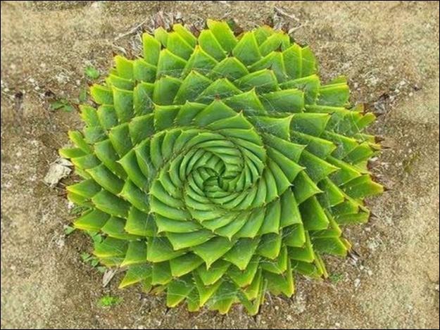 Quizz des plantes extraordinaires quiz fleurs plantes for Les plus belles plantes artificielles