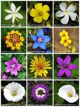 Des plantes extraordinaires