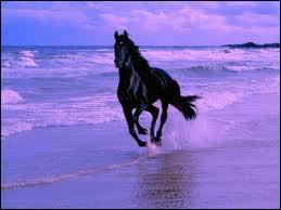On différencie un poney d'un cheval par :