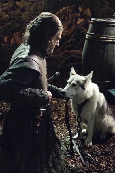 Après avoir bléssé Joffrey, Nymeria s'est enfuie, la reine exige alors la mise à mort de la louve de Sansa. Comment s'appelle cette dernière ?