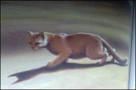 De quels chats Tempête de Sable sera-t-elle la tante dans  Aurore  ?