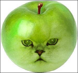 Un portrait à tomber dans les pommes ! Si vous possédez trois pommes et que vous en prenez deux, vous en possédez :