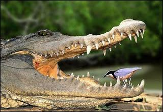 Il y laissera des plumes ! Il y a 4 coins. Dans chaque coin, il y a un oiseau, devant chaque oiseau, 3 oiseaux. Combien y a-t-il d'oiseaux ?