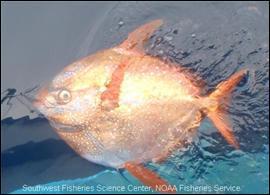 Je suis un prédateur efficace, se nourrissant de calmars et de petits poissons. Que suis-je ?
