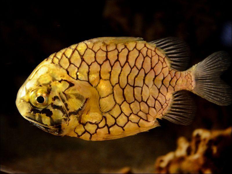 Quel est ce poisson détestant la lumière ?