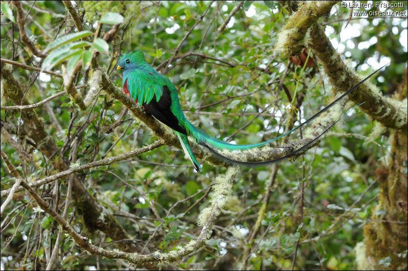 Quel est cet animal essentiel pour l'écosystème de la forêt amazonienne ?