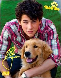 Quelle est la pointure de Nick Jonas ?