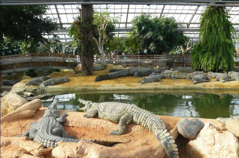 Unique en Europe, la Ferme aux Crocodiles est une immense serre paysagée de :
