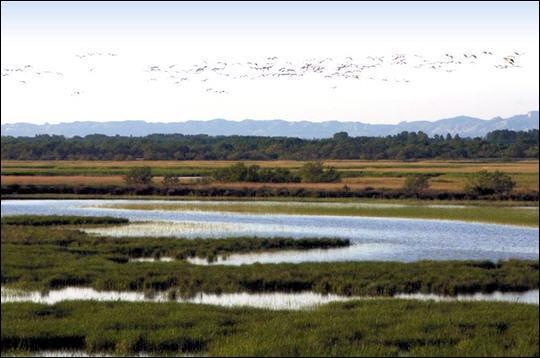 Les Marais du Vigueirat constituent un site majeur pour la conservation des oiseaux d'eau en Europe. Ont été observées sur le domaine :