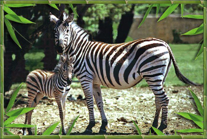 Le Zoo de la Barben accueille :