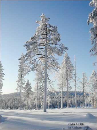 C'est l'espace le plus au Nord de l'Europe, s'étalant sur trois pays, et considéré comme le pays du père Noël !