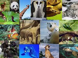 Les cris des animaux