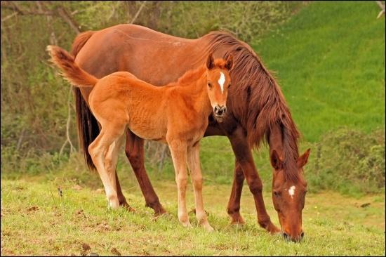 Quelle est la discipline où le cavalier n'est pas sur son cheval ?