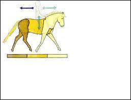Comment s'appellent les 3 parties principales du cheval ?