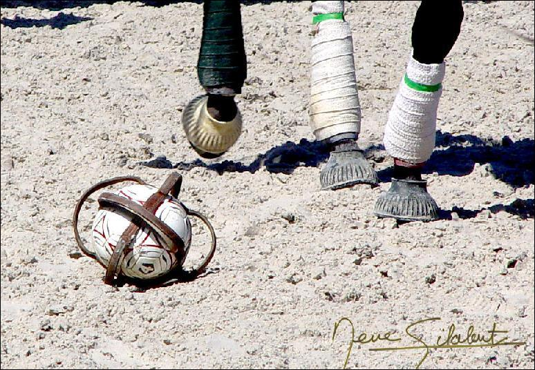 Quelle discipline équestre ce pratique avec un ballon ?