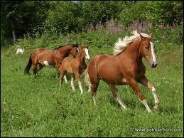 Combien un cheval a-t-il d'allures ?
