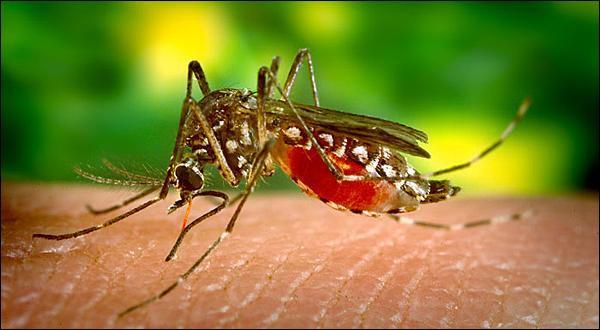 Cet immense projet commença avec un moustique trouvé dans l'ambre !