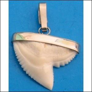 Le requin un poisson peu connu quiz qcm animaux - Requin enclume ...
