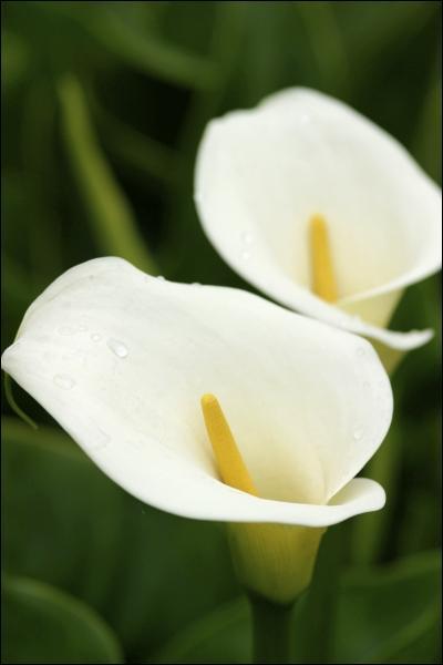 Écoutez votre âme.   Quelle fleur dois-je offrir ?
