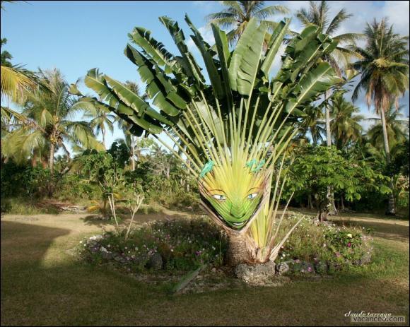 Les palmiers montrent leur vrai visage ! Évidemment, vous connaissez la capitale des États-Unis :