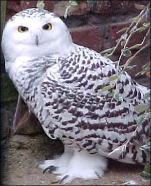 À partir du XIXe siècle, la beauté et l'élégance de cet oiseau lui ont prévalu les mauvais présages. Quelle est cette expression ?