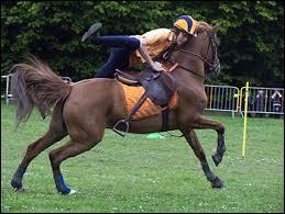 Les jeux à poney ou à cheval s'appelle ?