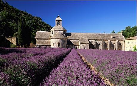 Cette abbaye est située en Provence, dans le département du Vaucluse, et est entourée de champs de lavande. Quel est son nom ?