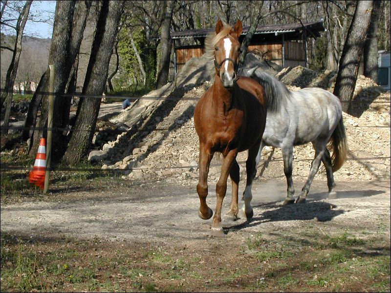 Comment amener son cheval sur le terrain ?
