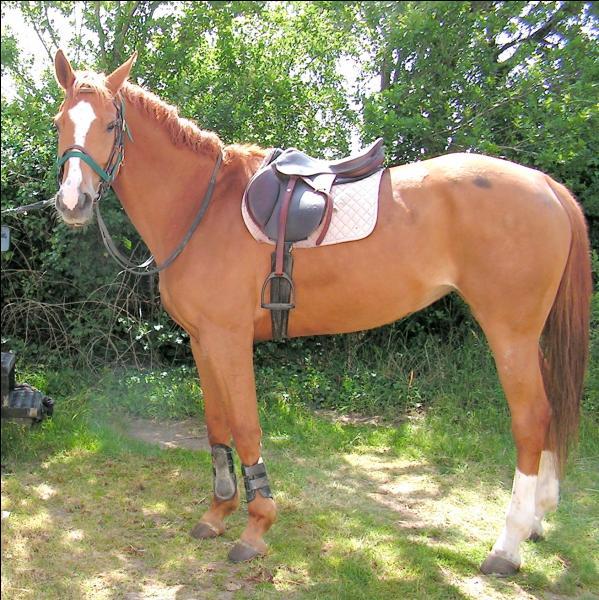 Comment monter correctement à cheval ?