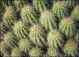 Qui chantait  Dans la vie il y a des cactus, moi je me pique de le savoir  ?