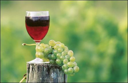 En boire en petite quantité, le vin peut apporter des éléments bénéfiques pour l'organisme, comment s'appellent ces molécules bénéfiques ?