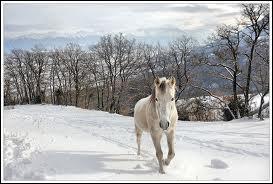 Que dois-je mettre en hiver pour mon cheval ?