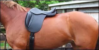 Puis-je monter ce cheval ?