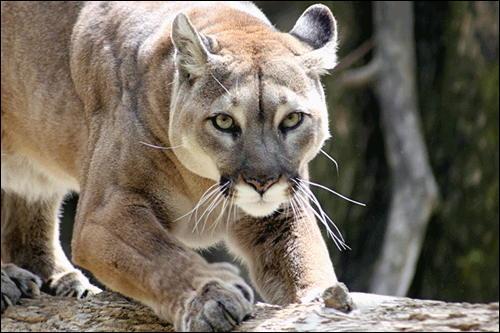 Facile à identifier, c'est une lionne africaine !